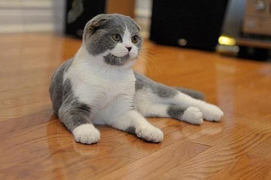 gambar kucing paling mahal