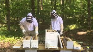 Deux apiculteurs travaillent aux ruches