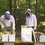 Deux apiculteur en action au rucher