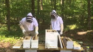 Deux apiculteurs faisant une division