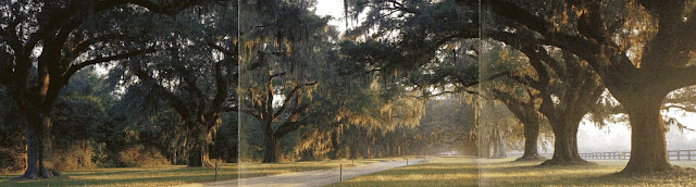 Avenue of Oaks, Boone Hall Plantation, Charleston, Carolina do Sul