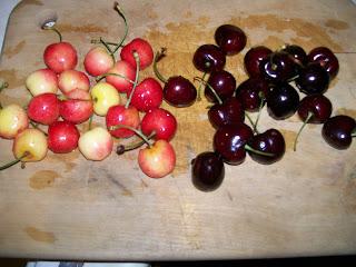 Rainier and Washington Dark Cherries