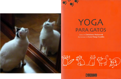 yoga-gatos-libro
