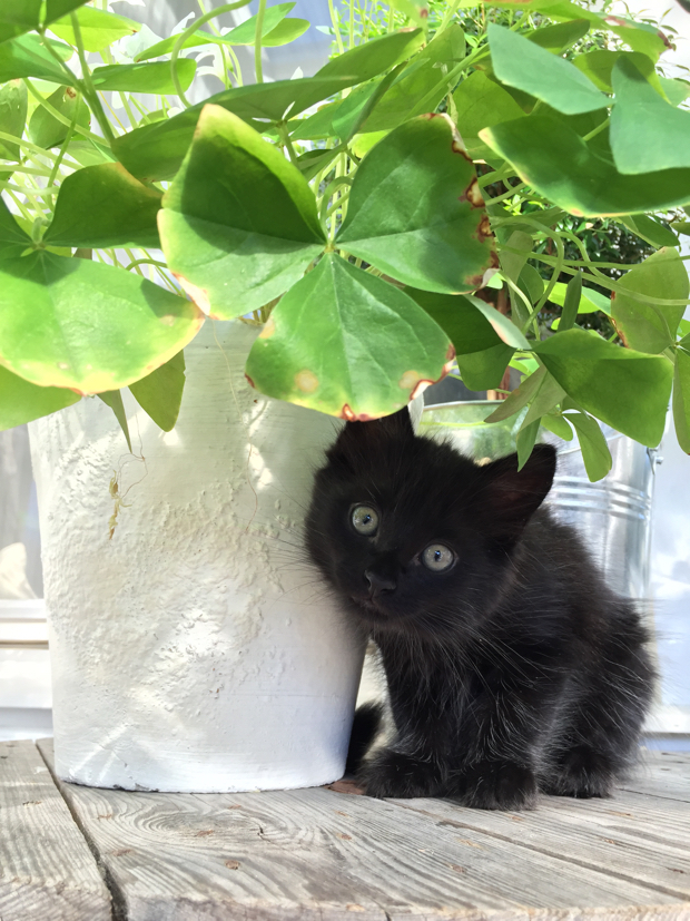 svart kattunge legolas hannashantverk.blogspot.se