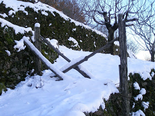 valle del jerte cerezos y nieve