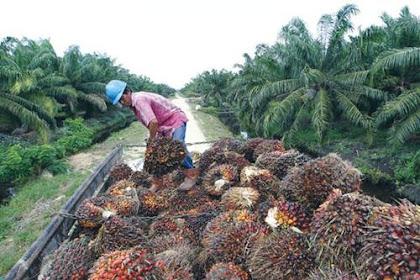 Lowongan Kerja Perusahaan Perkebunan Kelapa Sawit Indragiri Hilir Oktober 2018