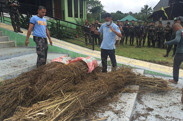 P5M worth of Marijuana seized in Maguindanao