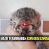 El Gato con DOS CABEZAS: este Adorable Gatito nació con tres ojos dos narices y dos bocas [VIDEO]