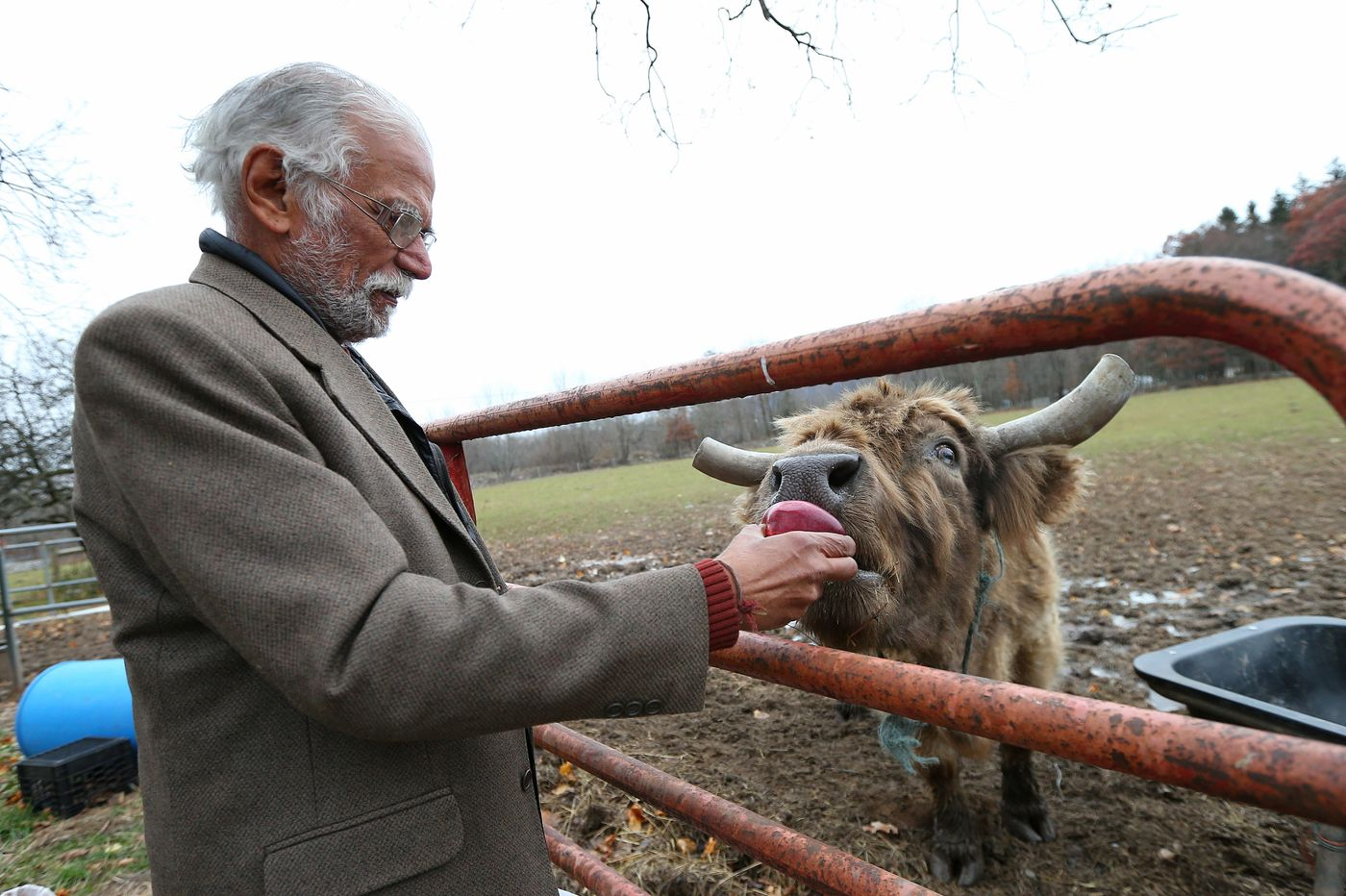Why A Hindu Man Left Brooklyn to Start A Cow Sanctuary in Pennsylvania