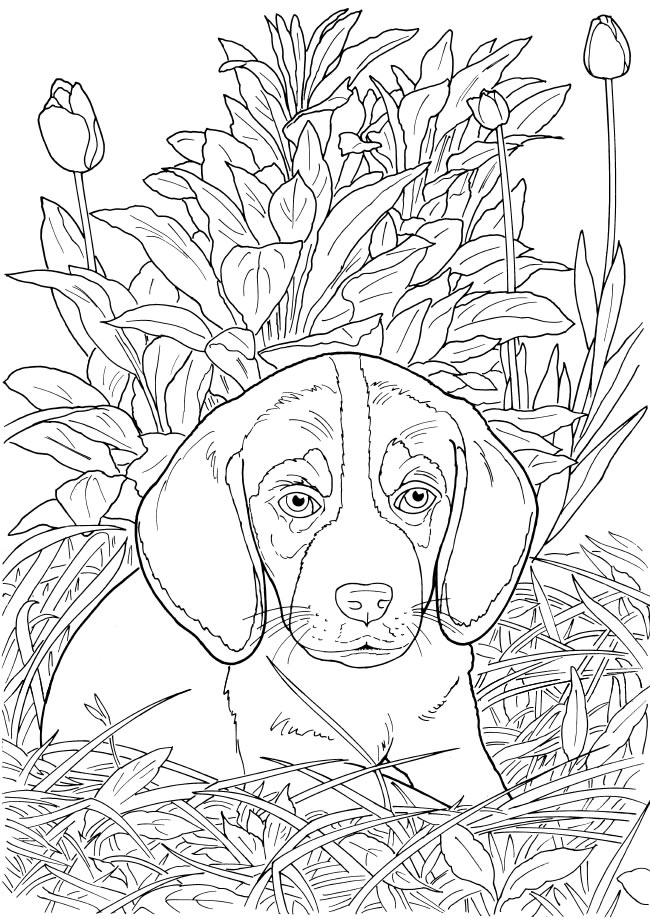 Dragonfly Treasure: Lovable Cats and Dogs Coloring Pages