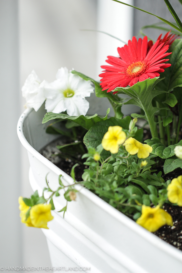 tips for planting potted flowers