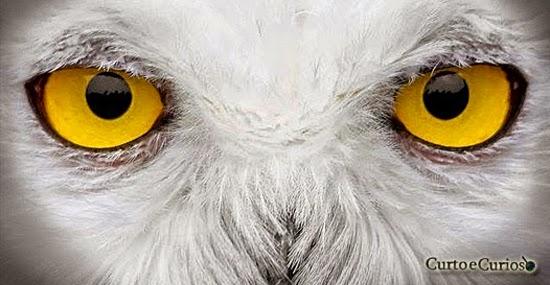 O Desafio dos 13 olhos misteriosos: identifique esses animais se for capaz!