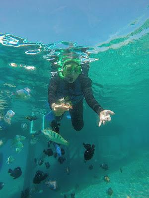 Snorkling Menjangan Bali Barat Banyuwangi