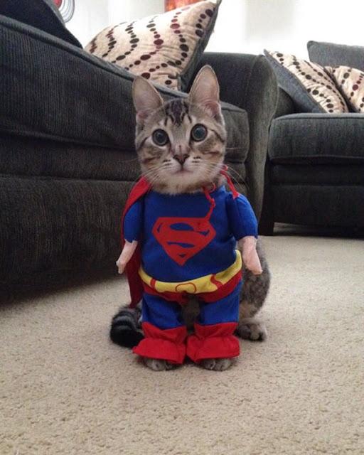 Fofas e divertidas fantasias de Halloween para os gatos