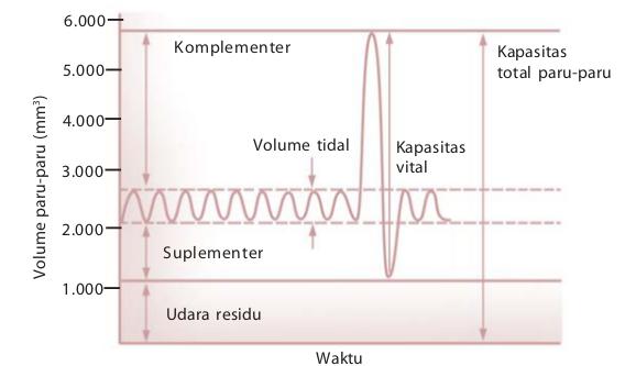 Volume Dan Kapasitas Paru-Paru