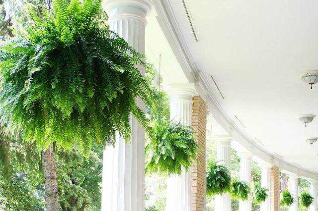 15 Rekomendasi Tanaman Hias Gantung Terbaik Untuk Mempercantik Rumah