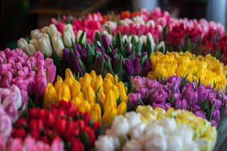 Des tulipes de toutes les couleurs