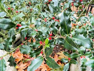Φτιάξτε τα δικά σας φάρμακα από Χριστουγεννιάτικα φυτά