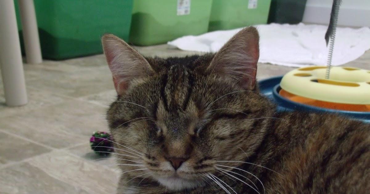 Blind Cat Rescue And Sanctuary 11 25 2015