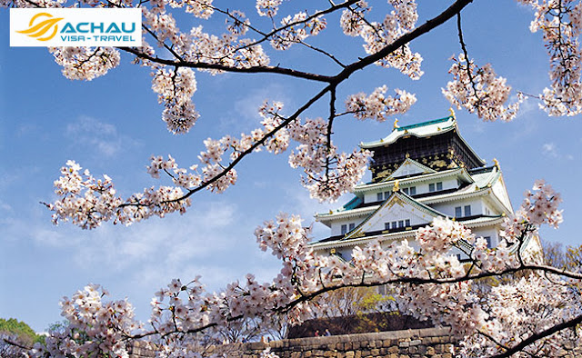 Du lịch Nhật Bản mùa hoa anh đào với nhiều điều mới lạ1
