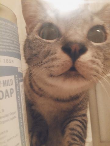 サバトラ猫の顔どアップ