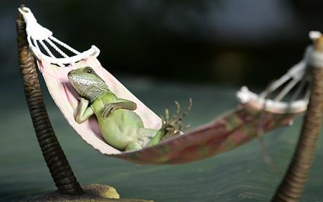 Zoo Animals Funny Lizards Nice Images 2012