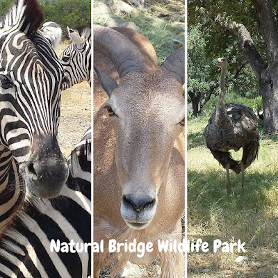 zebra, orynx, emu at Natural Bridge Wildlife Park