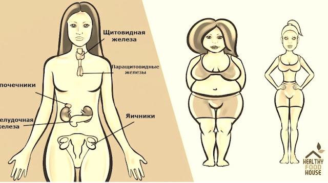 Картинки по запросу 6 гормонов, которые не дают вам скинуть вес