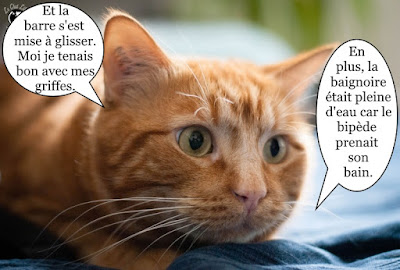 Beau chat orange !