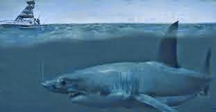 Tiger Shark - Legendary Thug Of The Sea - YouTube |Legendary Sharks
