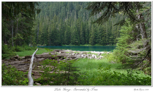 Lake George: Surrounded by Trees