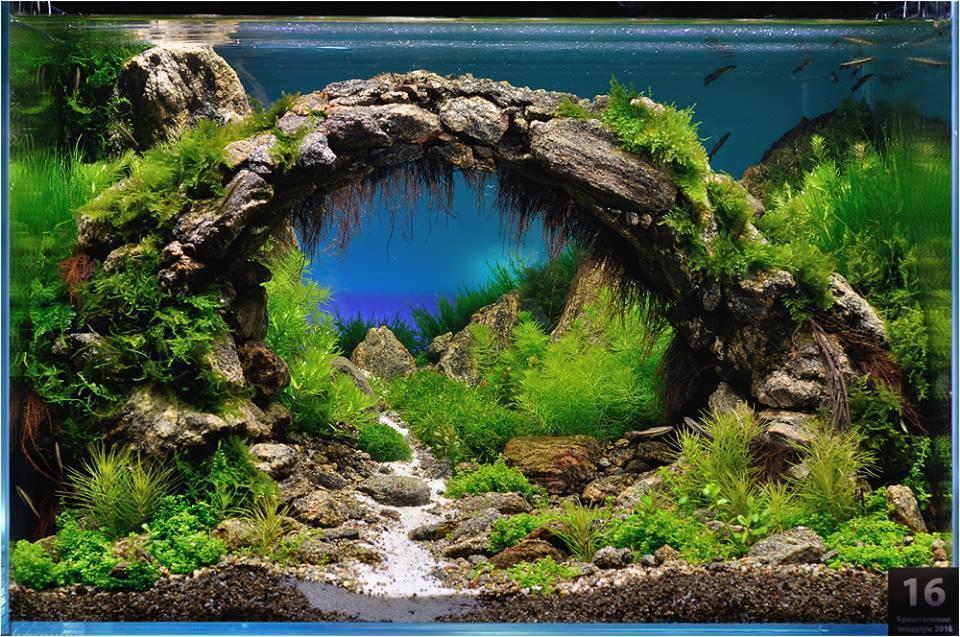 bể thủy sinh cầu vòng dán đá