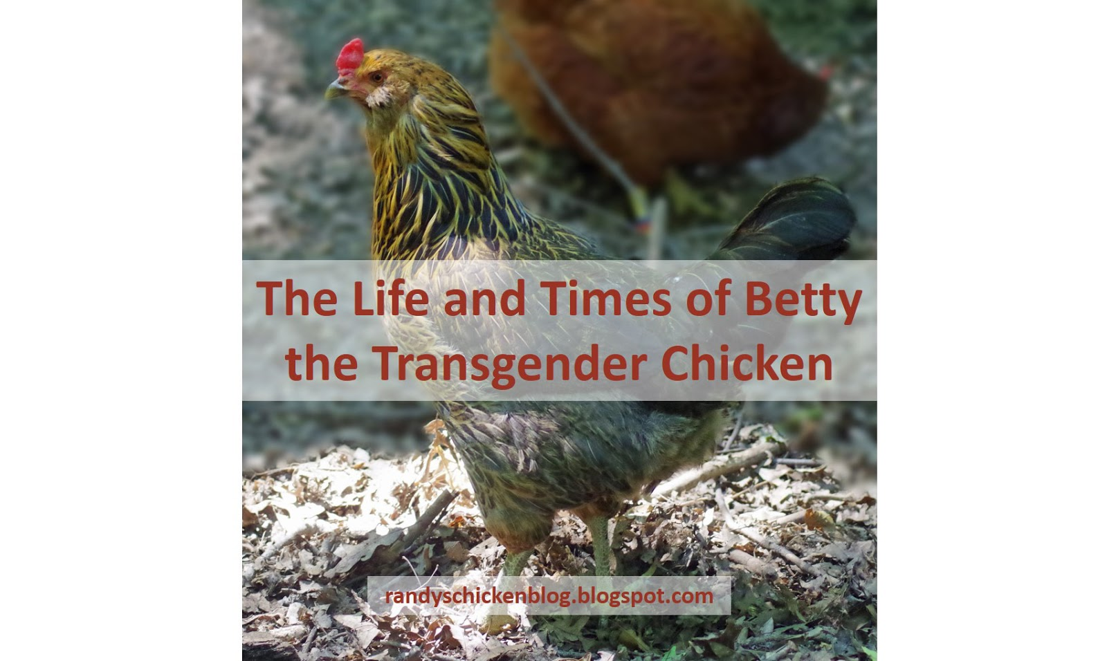 Betty+title+2.jpg
