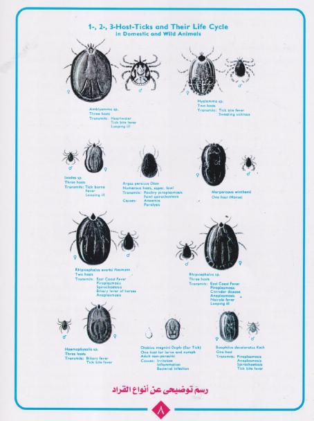 القراد Ticks