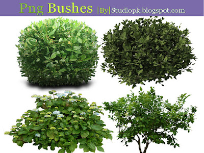 Png Bushes