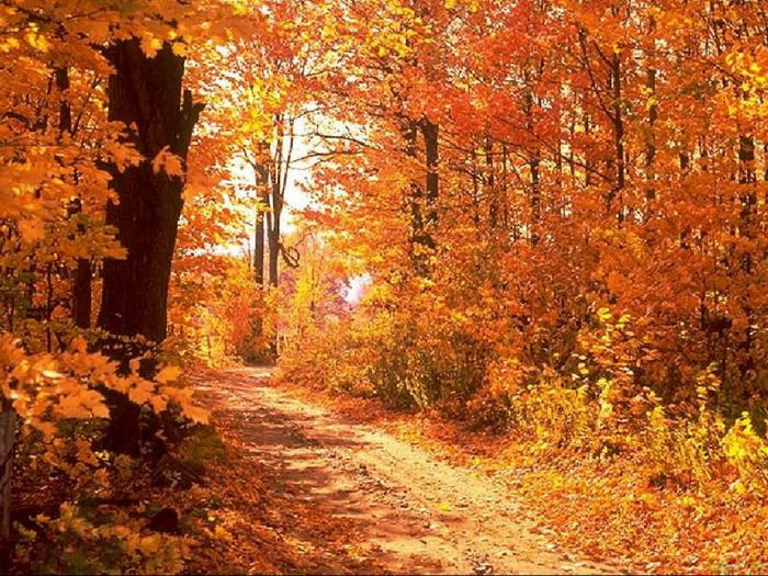 Autumn Season HD Wallpapers
