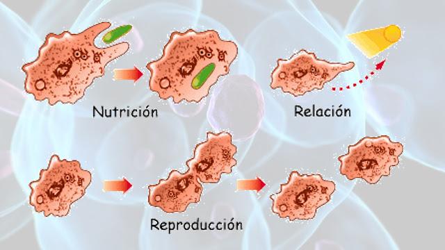 Funciones de la Célula Humana