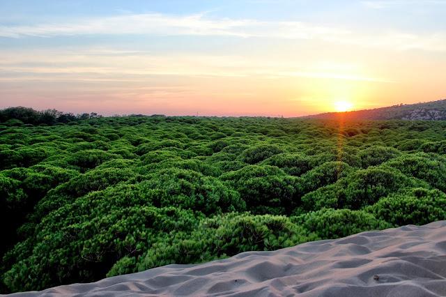 Puesta de sol en las Dunas de Bolonia