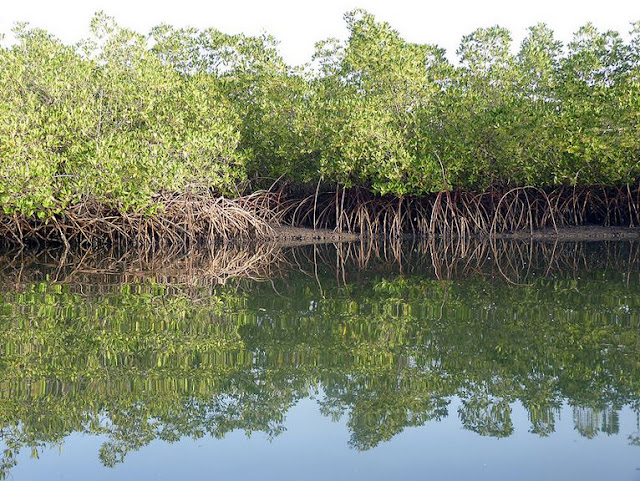 Buy Wall Art of Mangrove Creek