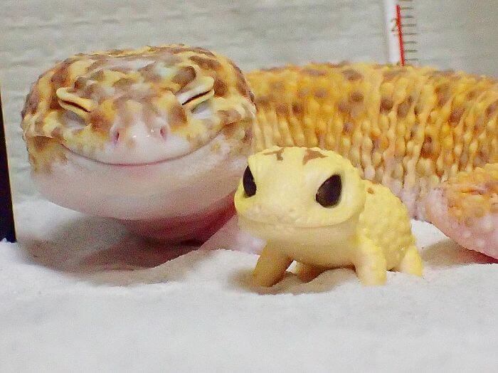 This Adorable, Smiling Gecko Will Definitely Make Your Day