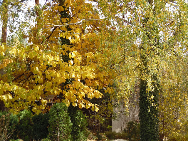 dąb i brzoza jesienią