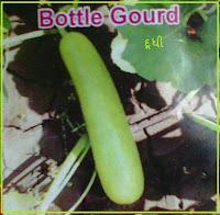 Bottle gourd seeds ahmedabad India