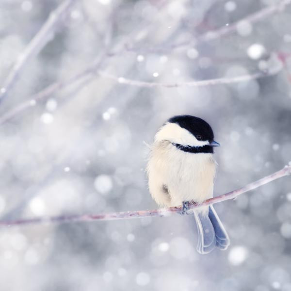 Beautiful winter scene with winter birds on branch in snow