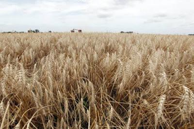 Tecnologia ajuda fazendeiros a enfrentar mudanças climáticas