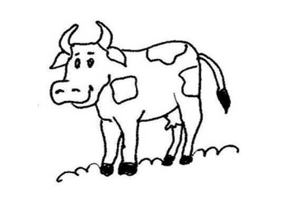 Evangeliza Vaca Para Colorir