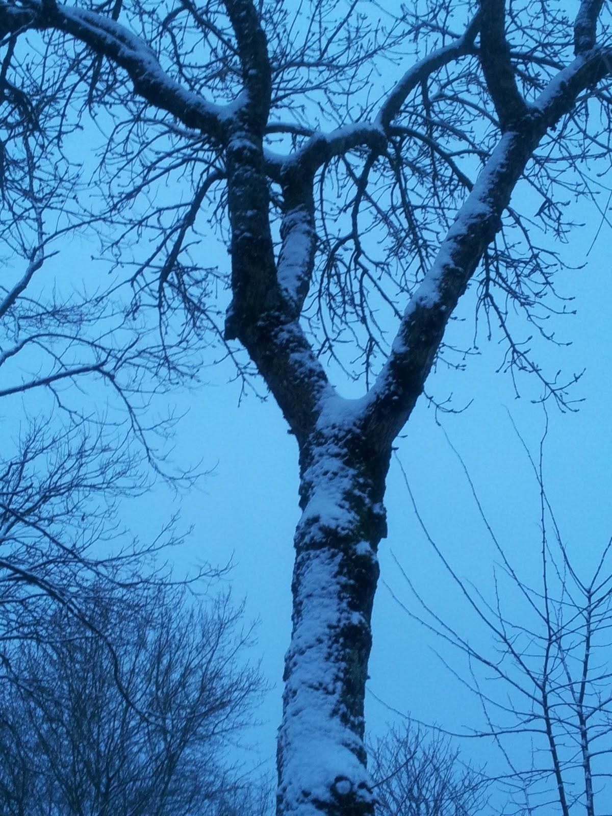 shiatsu passion fran oise couteron promenade tr s matinale sous la neige. Black Bedroom Furniture Sets. Home Design Ideas