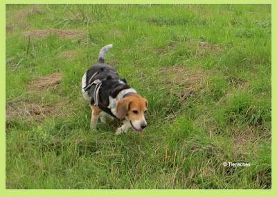 Der Hundeblog von Emma und Lotte