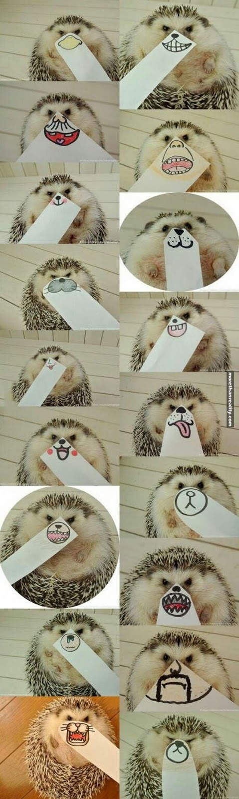 Funny animals of the week - 2 June 2017, funny animal images, best cute animal picture