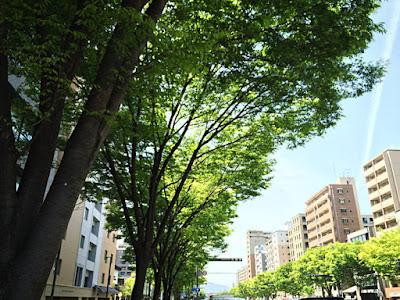 御池街路樹