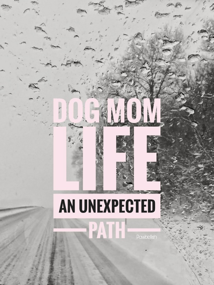 Winter road with text overlay,  Dog Mom Life An Unexpected Path